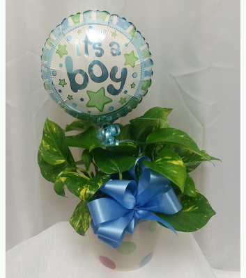 Baby Boy- Green Plant from Shaw Florists in Grand Rapids, MN