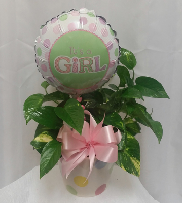 Baby Girl- Green Plant from Shaw Florists in Grand Rapids, MN