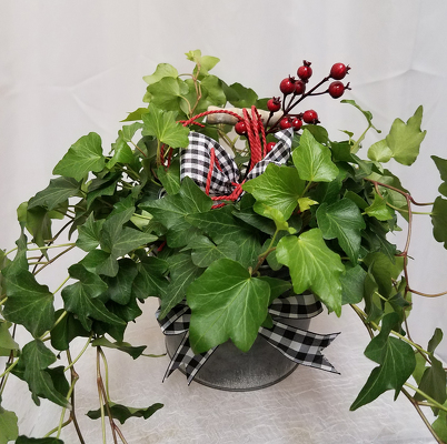 Holiday Ivy from Shaw Florists in Grand Rapids, MN