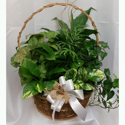 Euro-Garden Basket from Shaw Florists in Grand Rapids, MN