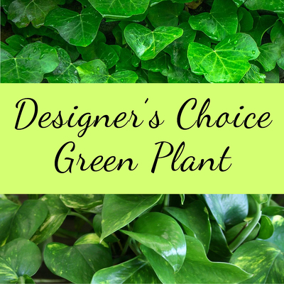 Designer's Choice-Green Plant from Shaw Florists in Grand Rapids, MN