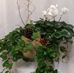 Ivy & Cyclamen Combo from Shaw Florists in Grand Rapids, MN