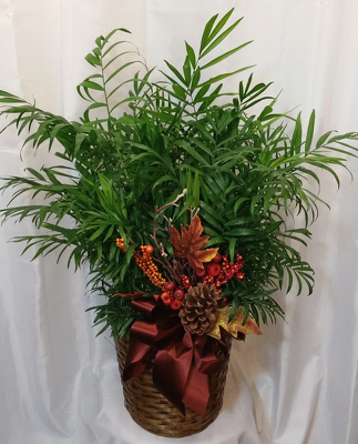 Neantha Bella Palm from Shaw Florists in Grand Rapids, MN