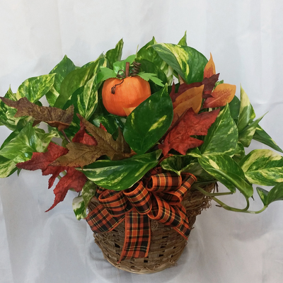 Pumpkin Patch Pothos from Shaw Florists in Grand Rapids, MN